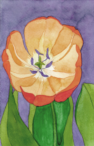 single-orange-tulip2
